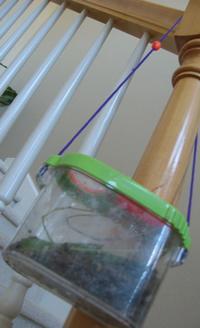earthworm condo